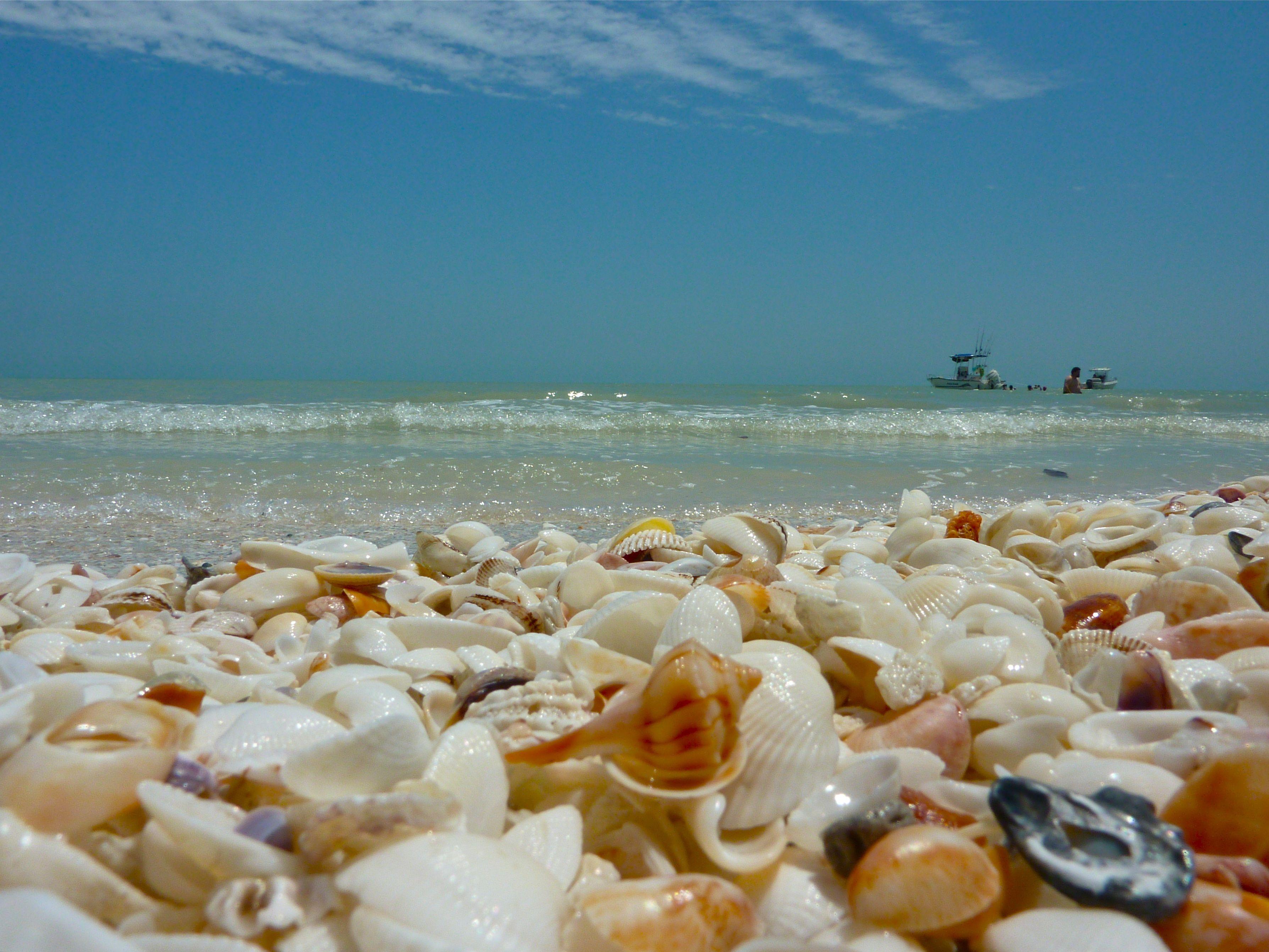 Sanibel Island Fl: 40 Photos Of Sanibel Island, Florida: Thousands Of Exotic