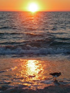 Captiva sunset with shore bird
